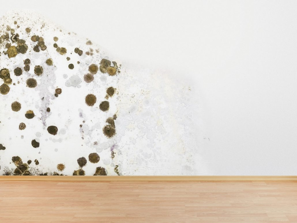 Paredes afectadas con moho